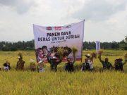 Petani Aceh dan Ketua ACT melaksanakan panen raya di Aceh Besar. (ist)