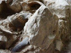Kerangka manusia purba yang berusia 3.000 Tahun ditemukan di Mandale, Takengon, Aceh Tengah. (Footo/ist)