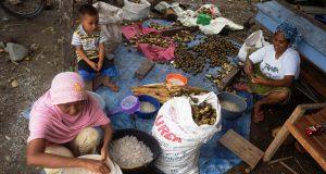 Pengolahan kolang kaling yang dikerjakan para ibu-ibu warga Desa Lam Aling, Aceh Besar. (Foto/Dani Randi)
