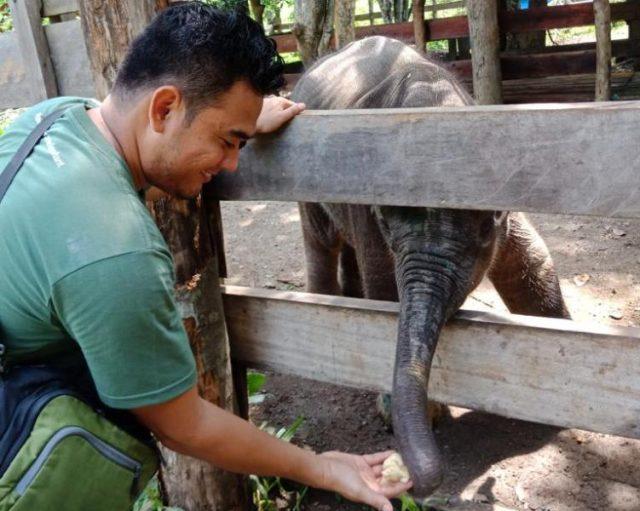 Amirah alias Mey, anak gajah yang dievakuasi dari Geumpang, Aceh, karena terluka akibat jeratan, akhirnya mati di Pusat Latihan Gajah Saree, Kecamatan Lembah Seulawah, Aceh Besar, Senin (24/9/2018). (Foto/Ist)