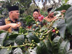 Bupati Aceh Tengah, Shabela Abubakar, saat meninjau kebun kopi milik seorang petani, tampak terawat dengan baik. (dok/ Waspada).