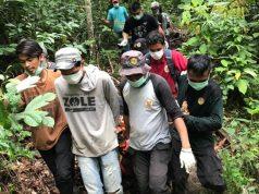 Petugas Seksi Konservasi Wilayah (SKW) II Subulussalam melalui Resor Konservasi Wilayah (RKW) Trumon bersama YOSL-OIC mengevakuasi orangutan di Titi Poben, Trumon Aceh Selatan, Senin (14/1/2019).(Foto/Ist)