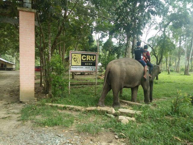 Mahout (petugas penjaga gajah ) sedang melayani pengunjung yang sedang bermain bersama gajah di seputaran Camp CRU Sampoiniet, Aceh Jaya, Kamis (31/1/2019). (Foto/Zammil)