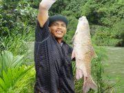 Seorang pemancing menunjukkan ikan keurling atau jurung hasil tangkapannya. (Foto/Ist)